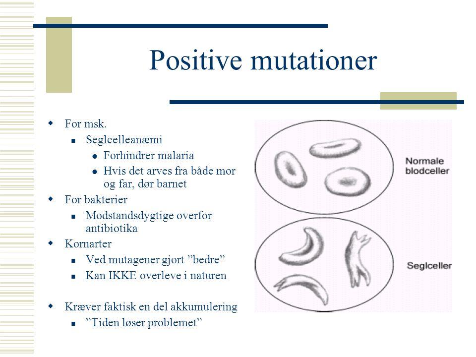 Positive mutationer For msk. Seglcelleanæmi Forhindrer malaria