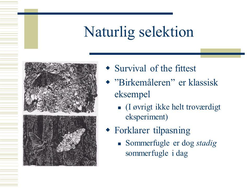 Naturlig selektion Survival of the fittest