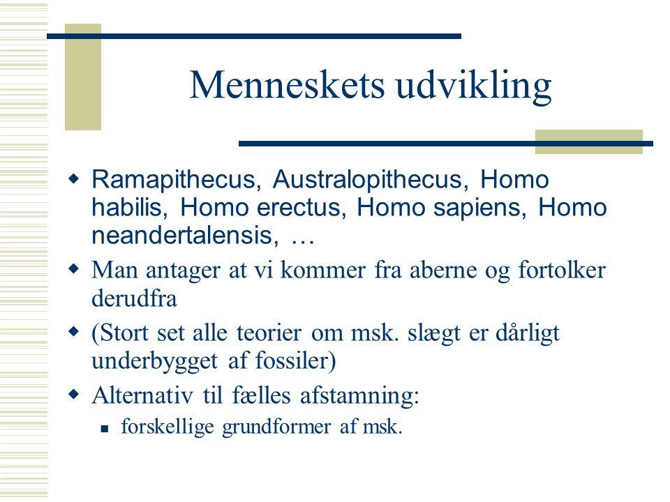 Menneskets udvikling Ramapithecus, Australopithecus, Homo habilis, Homo erectus, Homo sapiens, Homo neandertalensis, …