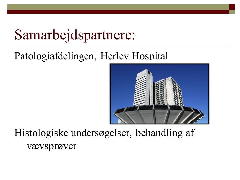 Samarbejdspartnere: Patologiafdelingen, Herlev Hospital Histologiske undersøgelser, behandling af vævsprøver