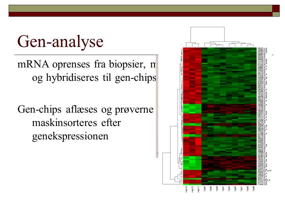 Gen-analyse mRNA oprenses fra biopsier, mærkes og hybridiseres til gen-chips.
