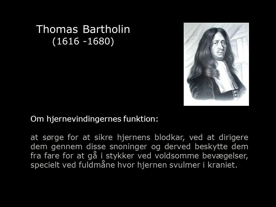 Thomas Bartholin (1616 -1680) Om hjernevindingernes funktion: