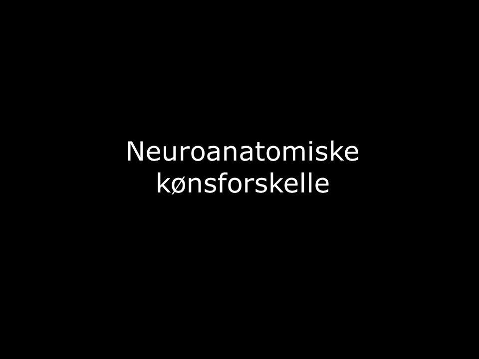 Neuroanatomiske kønsforskelle