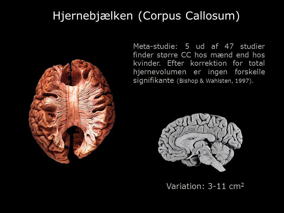 Hjernebjælken (Corpus Callosum)