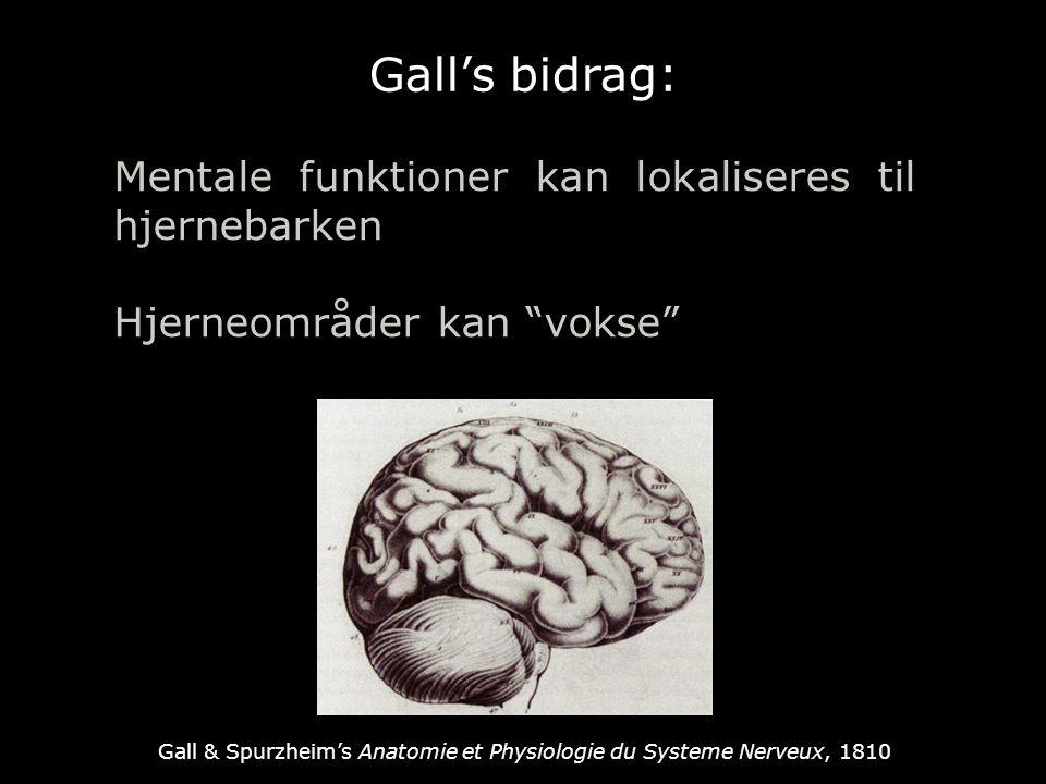 Gall's bidrag: Mentale funktioner kan lokaliseres til hjernebarken