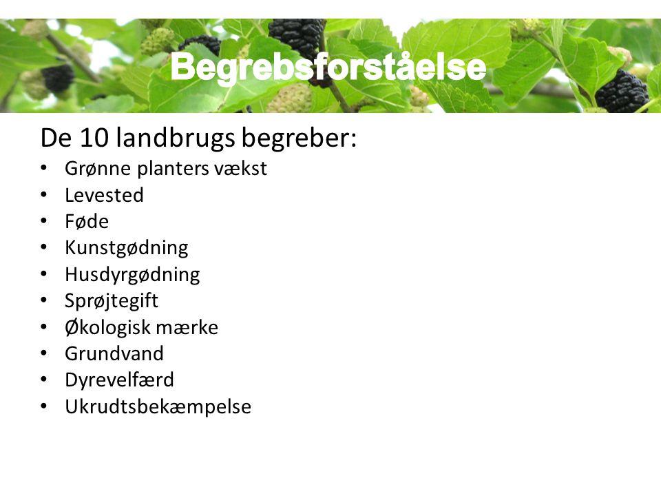 Begrebsforståelse De 10 landbrugs begreber: Grønne planters vækst