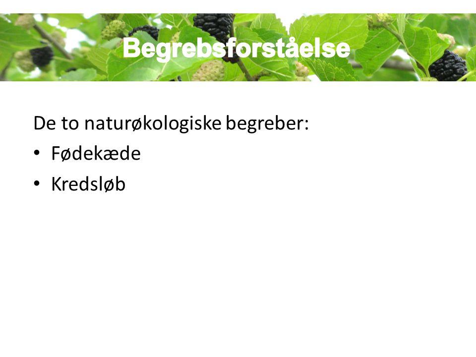 Begrebsforståelsen Begrebsforståelse De to naturøkologiske begreber: