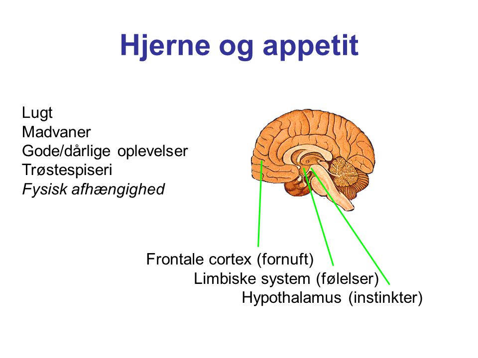 Hjerne og appetit Lugt Madvaner Gode/dårlige oplevelser Trøstespiseri