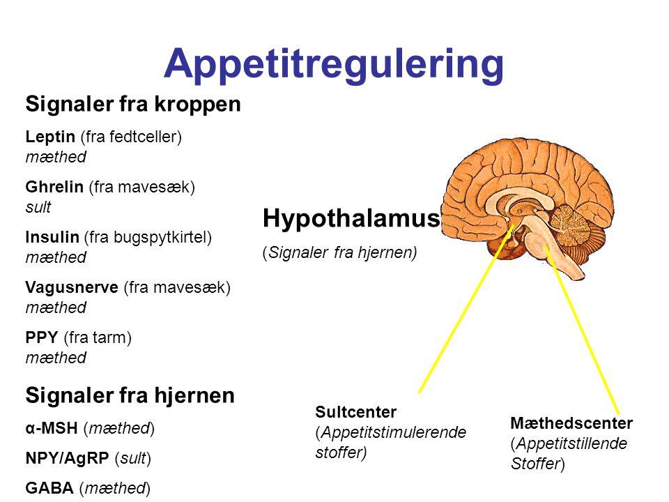 Appetitregulering Hypothalamus (Signaler fra hjernen)