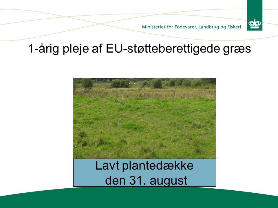 1-årig pleje af EU-støtteberettigede græs