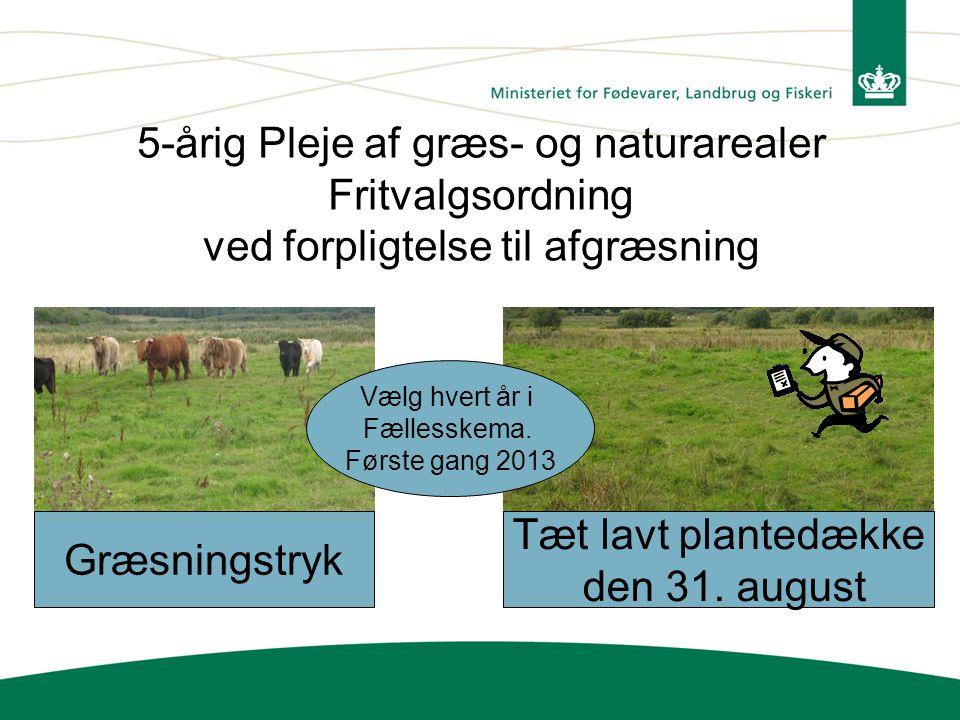 5-årig Pleje af græs- og naturarealer Fritvalgsordning ved forpligtelse til afgræsning