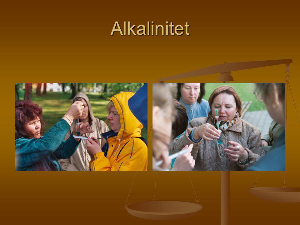 Alkalinitet