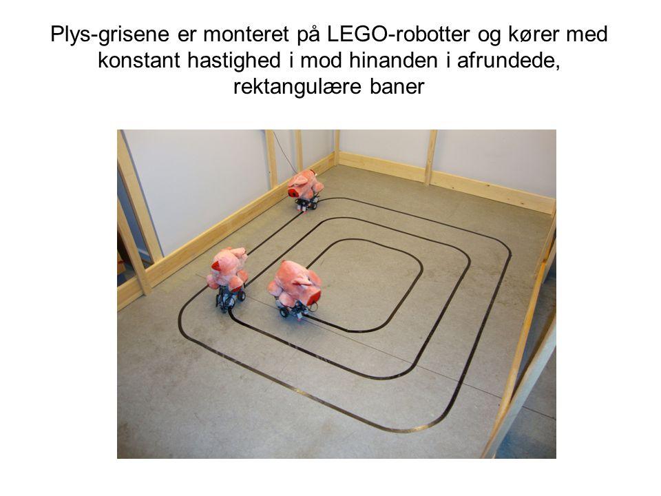 Plys-grisene er monteret på LEGO-robotter og kører med konstant hastighed i mod hinanden i afrundede, rektangulære baner