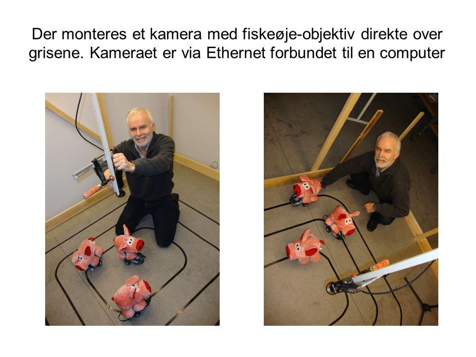 Der monteres et kamera med fiskeøje-objektiv direkte over grisene