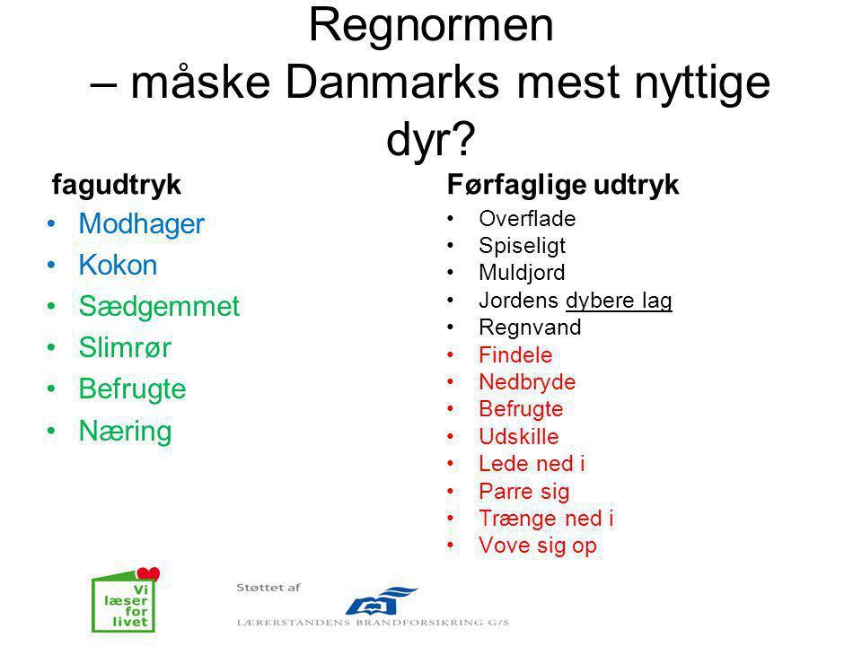 Regnormen – måske Danmarks mest nyttige dyr