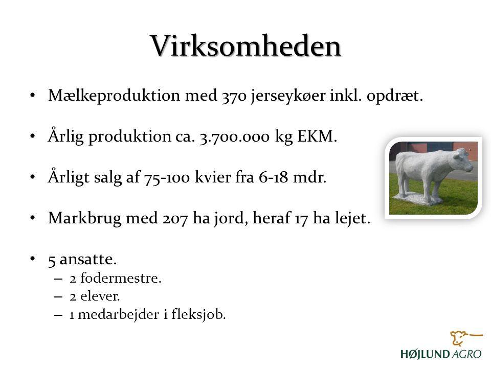 Virksomheden Mælkeproduktion med 370 jerseykøer inkl. opdræt.