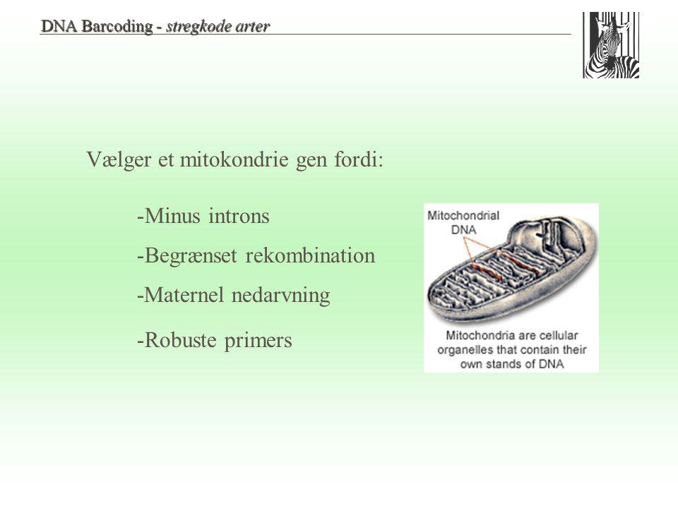 Vælger et mitokondrie gen fordi: