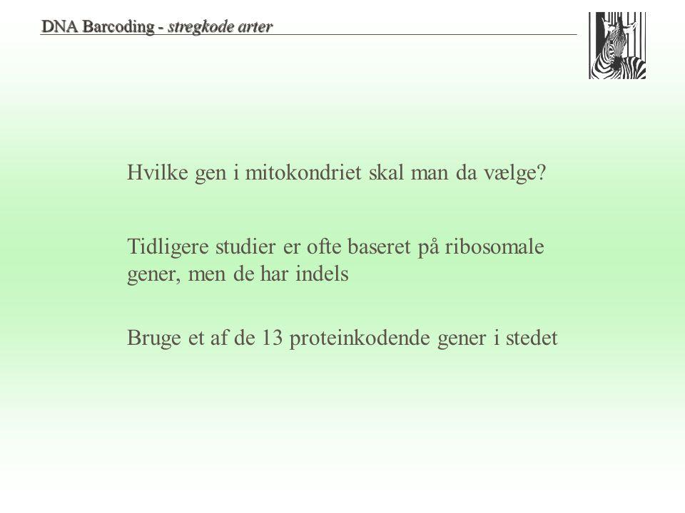 Hvilke gen i mitokondriet skal man da vælge
