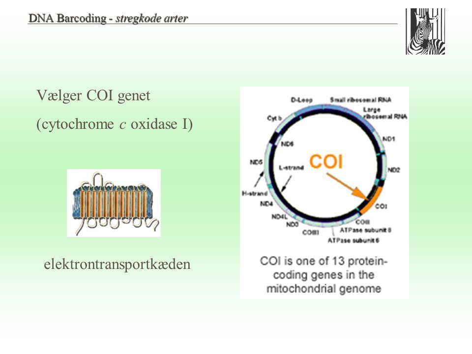 (cytochrome c oxidase I)