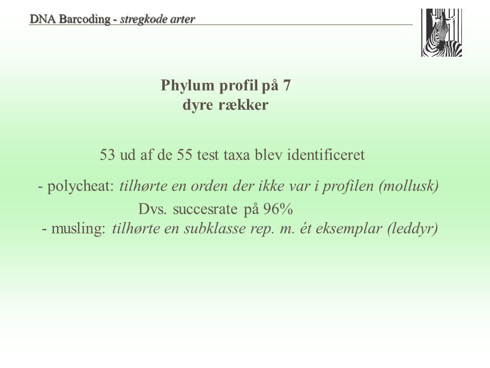 Phylum profil på 7 dyre rækker