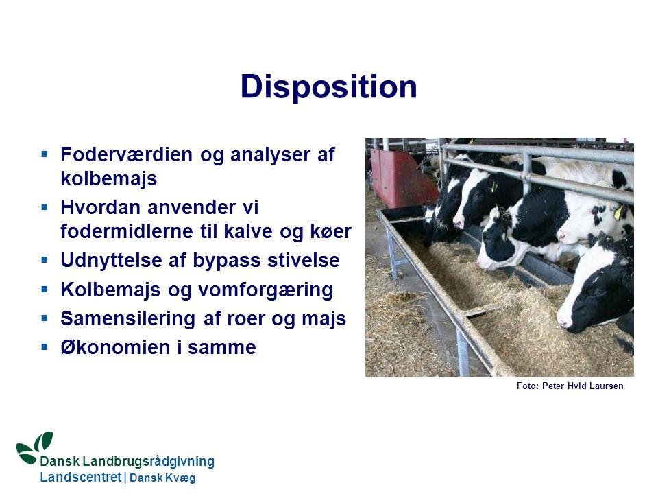 Disposition Foderværdien og analyser af kolbemajs
