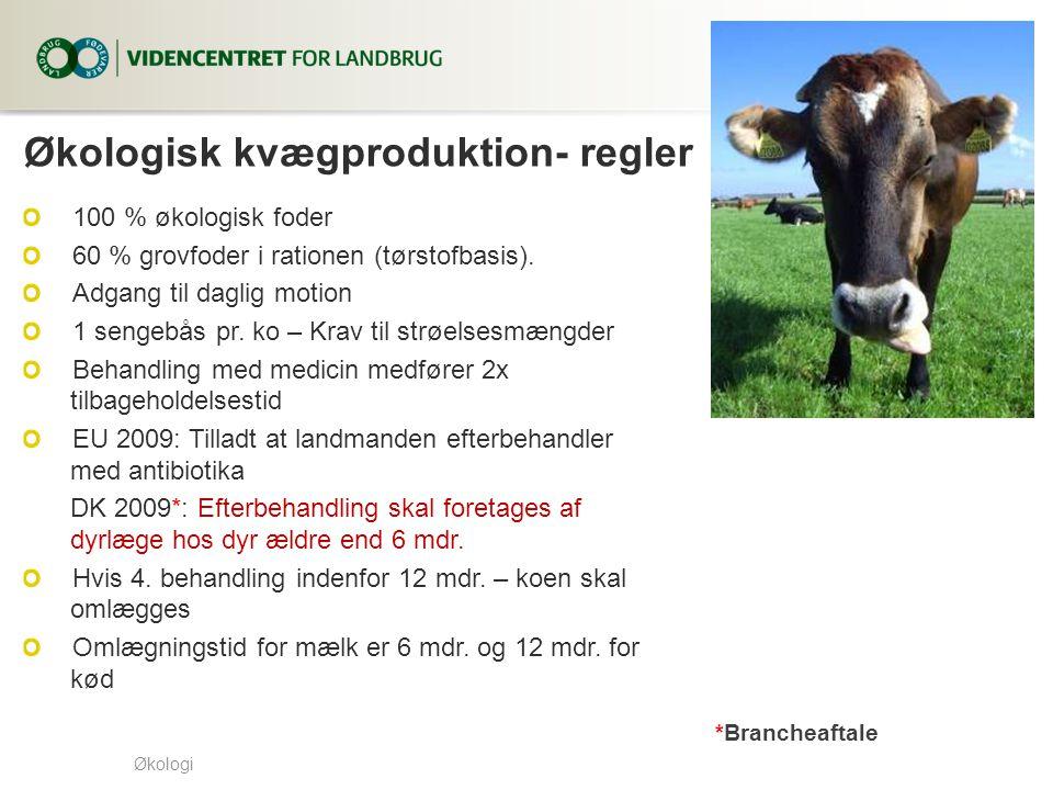Økologisk kvægproduktion- regler