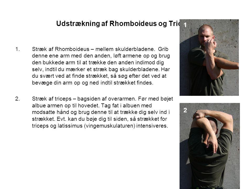 Udstrækning af Rhomboideus og Triceps.