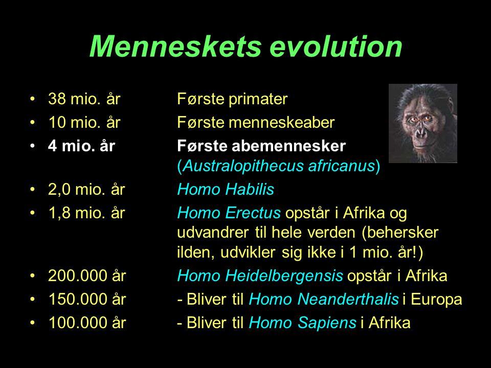 Menneskets evolution 38 mio. år Første primater