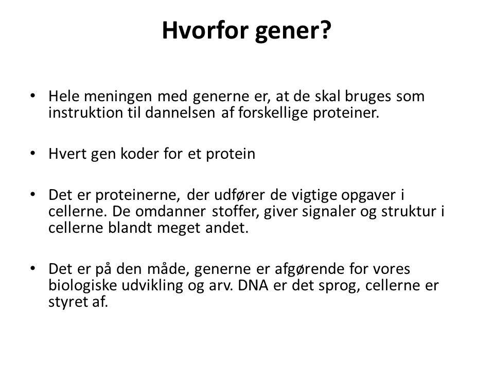 Hvorfor gener Hele meningen med generne er, at de skal bruges som instruktion til dannelsen af forskellige proteiner.