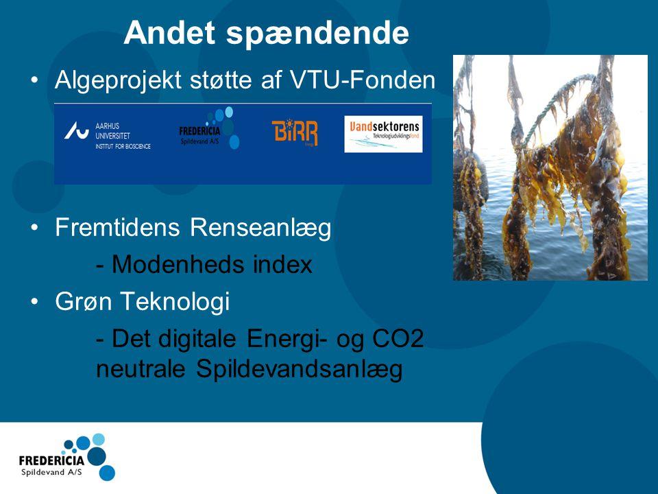 Andet spændende Algeprojekt støtte af VTU-Fonden Fremtidens Renseanlæg