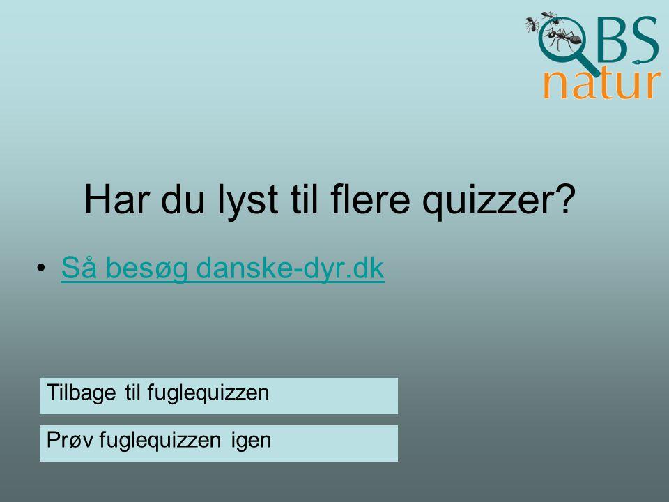 Har du lyst til flere quizzer