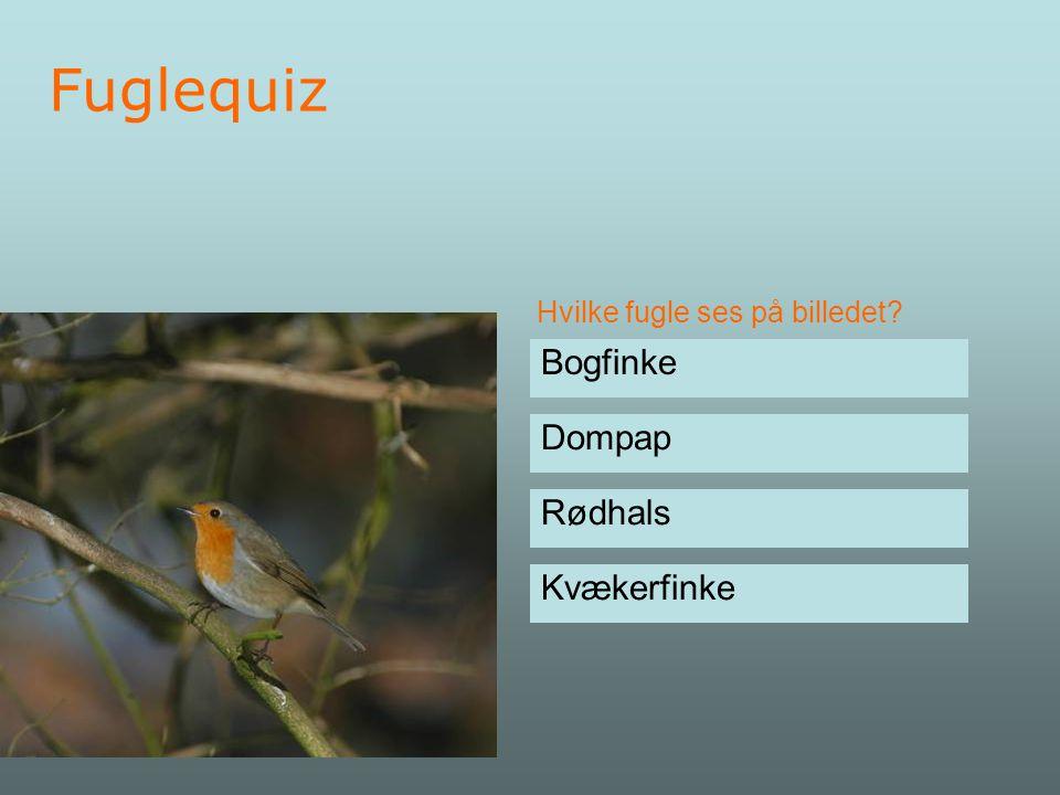 Fuglequiz Bogfinke Dompap Rødhals Kvækerfinke