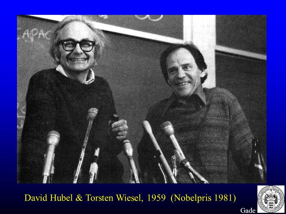 David Hubel & Torsten Wiesel, 1959 (Nobelpris 1981)