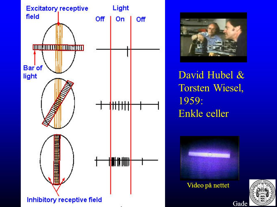 David Hubel & Torsten Wiesel, 1959: Enkle celler