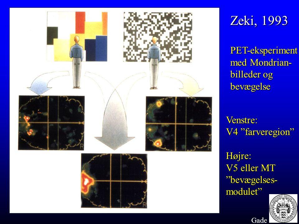 Zeki, 1993 PET-eksperiment med Mondrian- billeder og bevægelse