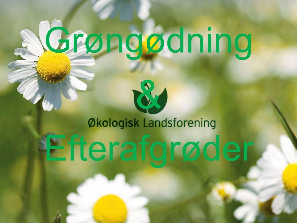 Grøngødning & Efterafgrøder
