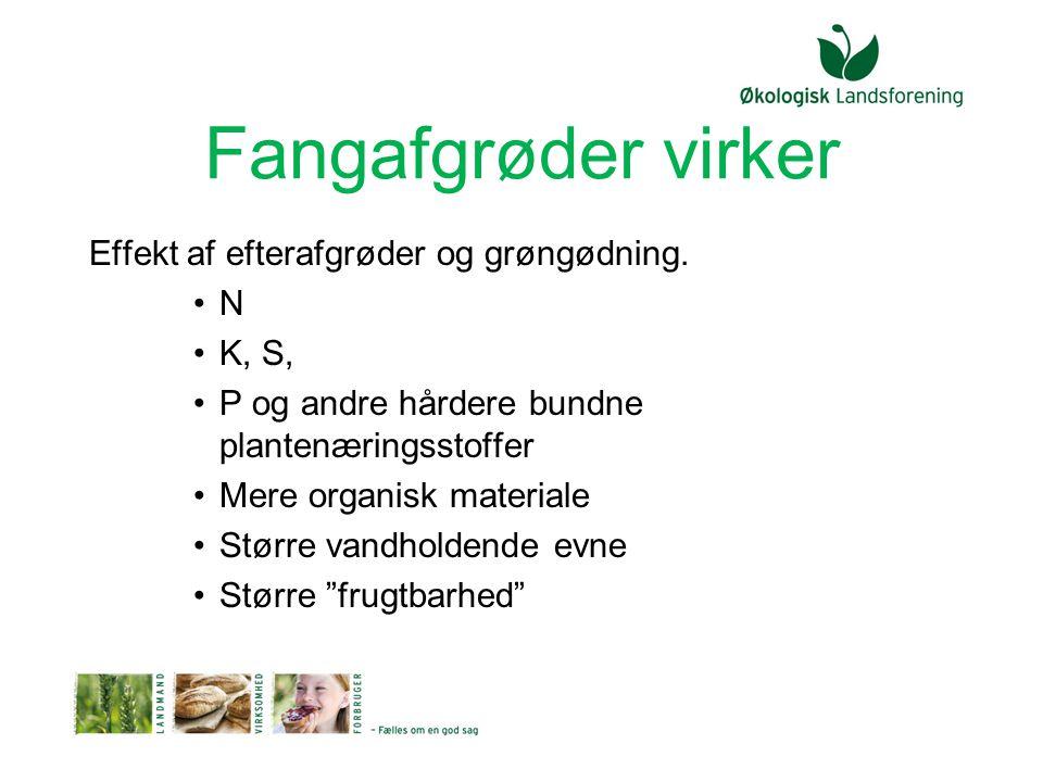 Fangafgrøder virker Effekt af efterafgrøder og grøngødning. N K, S,