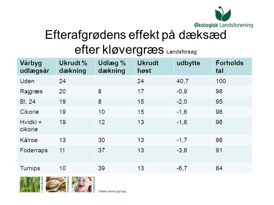 Efterafgrødens effekt på dæksæd efter kløvergræs Landsforsøg
