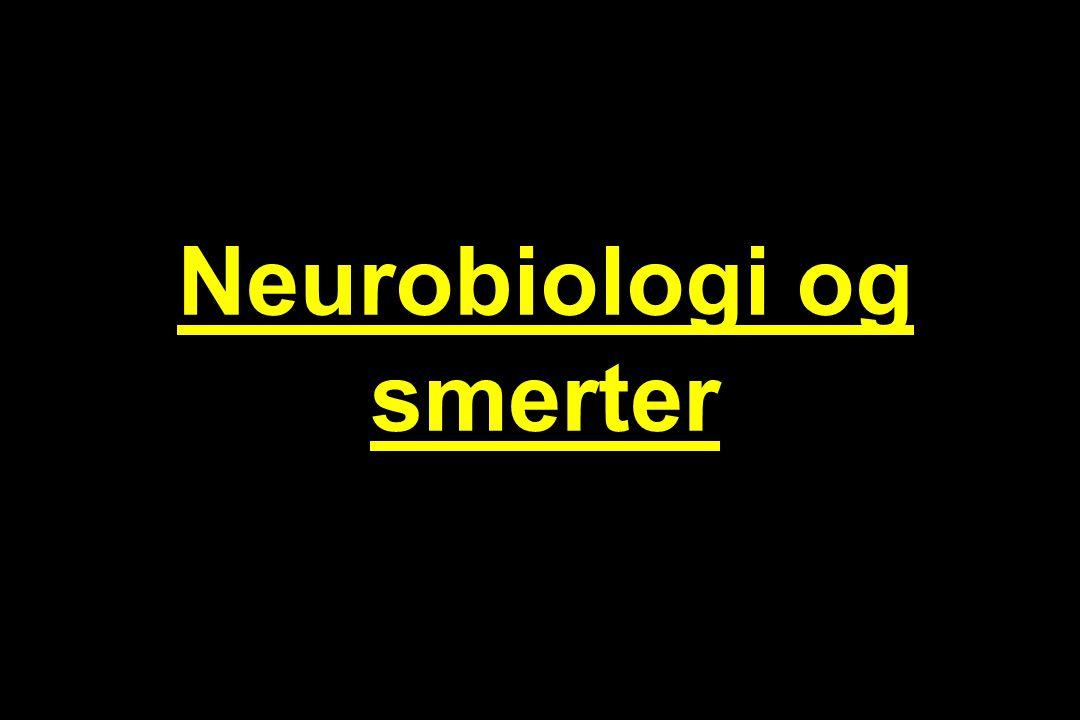 Neurobiologi og smerter
