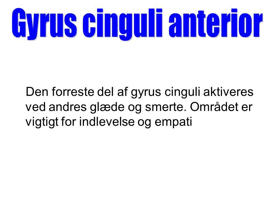 Gyrus cinguli anterior