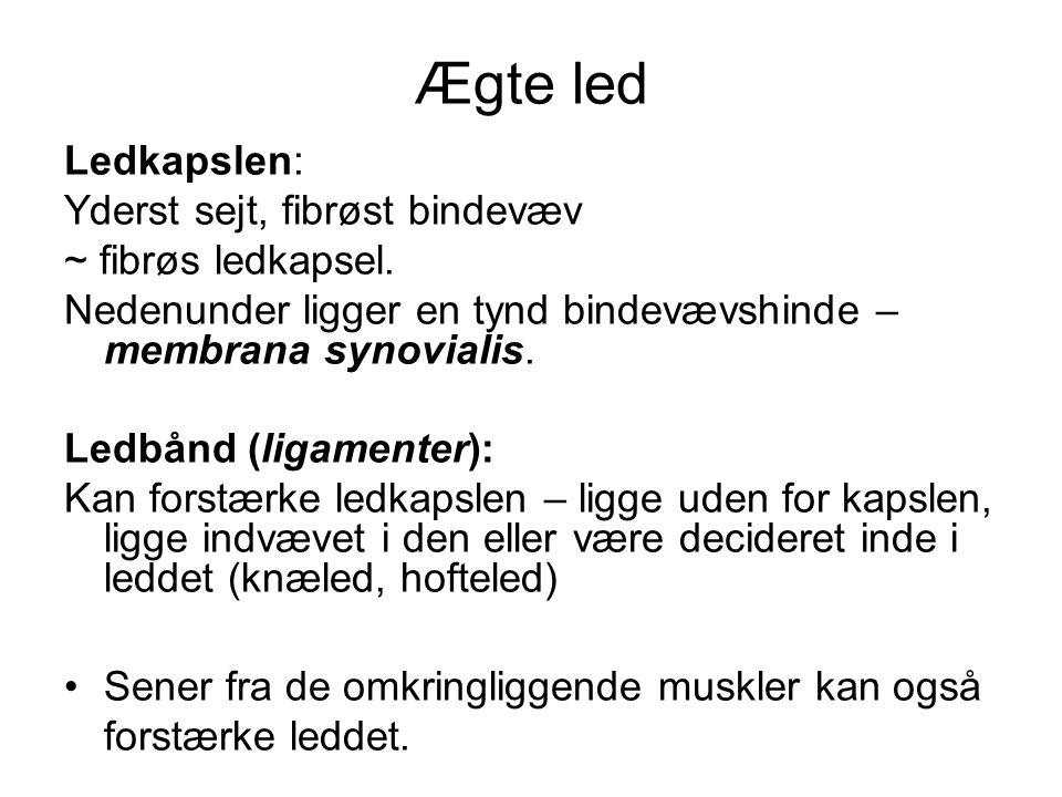 Ægte led Ledkapslen: Yderst sejt, fibrøst bindevæv ~ fibrøs ledkapsel.