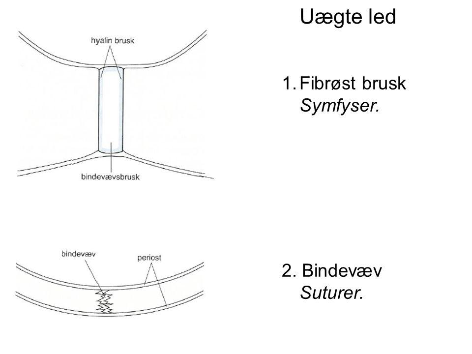 Uægte led Fibrøst brusk Symfyser. 2. Bindevæv Suturer.