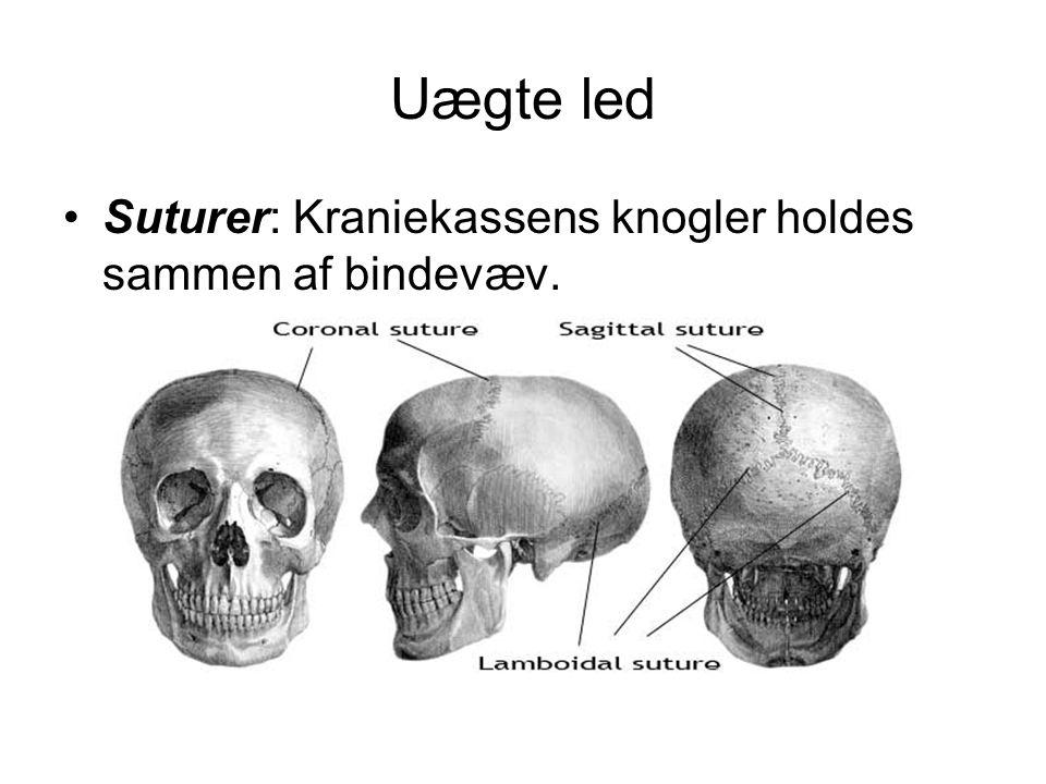Uægte led Suturer: Kraniekassens knogler holdes sammen af bindevæv.