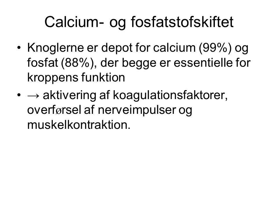 Calcium- og fosfatstofskiftet