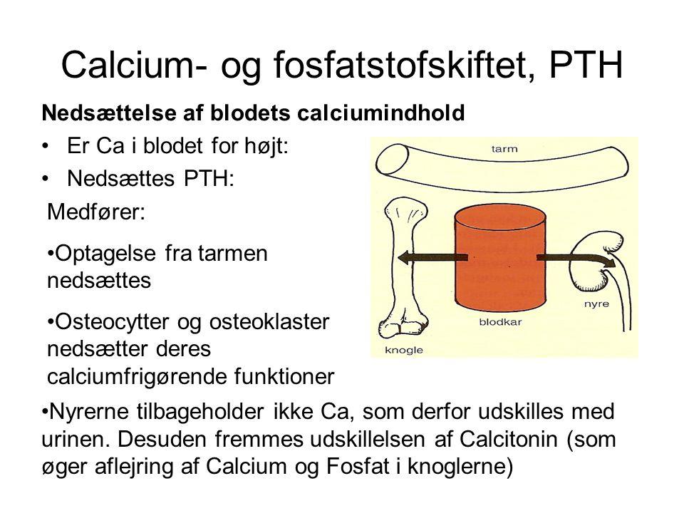 Calcium- og fosfatstofskiftet, PTH