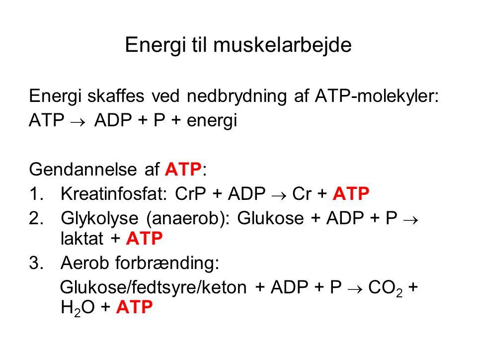 Energi til muskelarbejde