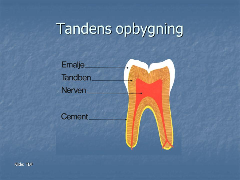 Tandens opbygning Kilde: TDF