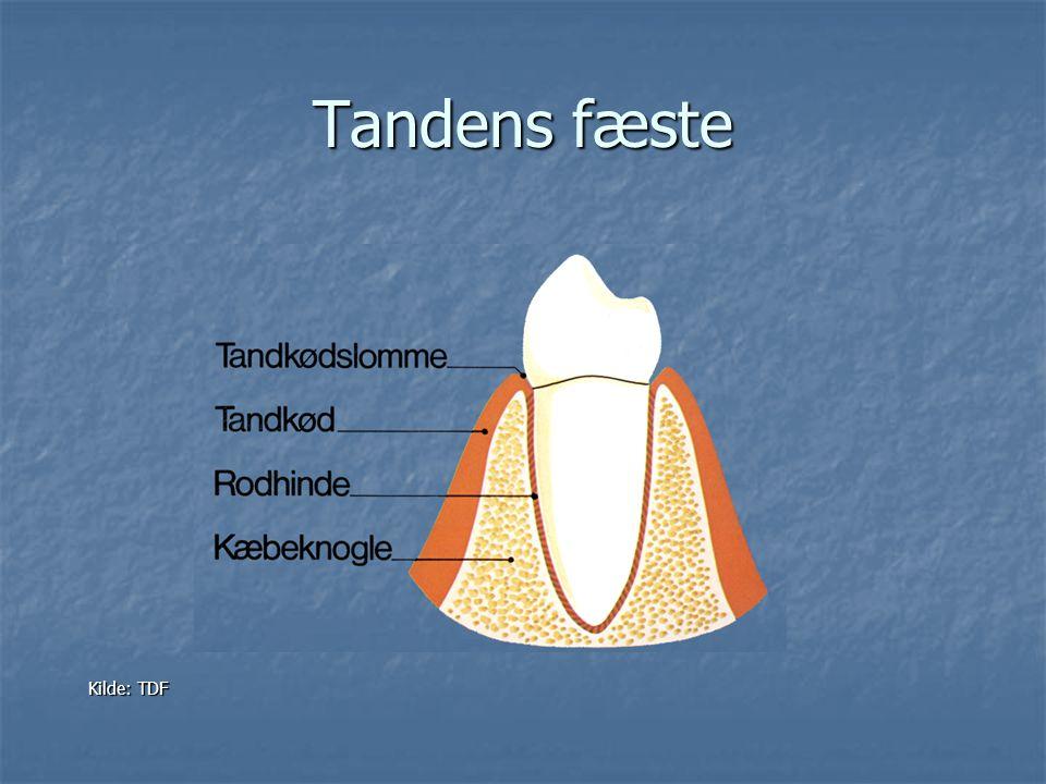 Tandens fæste Kilde: TDF