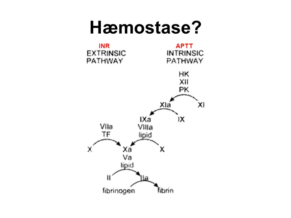 Hæmostase INR APTT