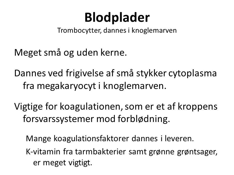 Blodplader Trombocytter, dannes i knoglemarven